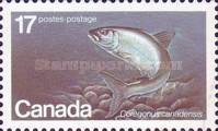 Atlantischer Weißfisch (Coregonus canadensis)