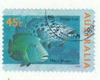Gefleckter Riesenzackenbarsch (Epinephelus tukula) und Napoleon-Lippfisch (Cheilinus undulatus)
