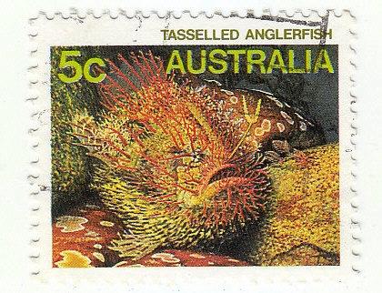Quasten-Anglerfisch (Rhycherus filamentosus)