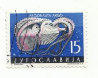 Papierboot (Argonauta argo)