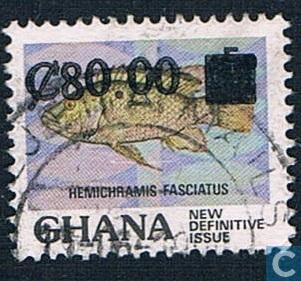 Gebänderter Juwelenfisch (Hemichromis fasciatus)