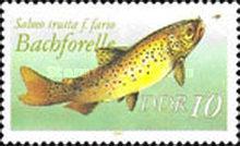 Bachforelle (Salmo trutta f. fario)