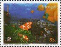 Orange Ringelfisch (Amphiprion ocellaris)
