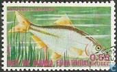 Bitterling (Rhodus amarus)