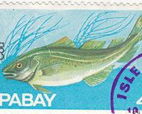 Cod - Kabeljau, Schellfisch
