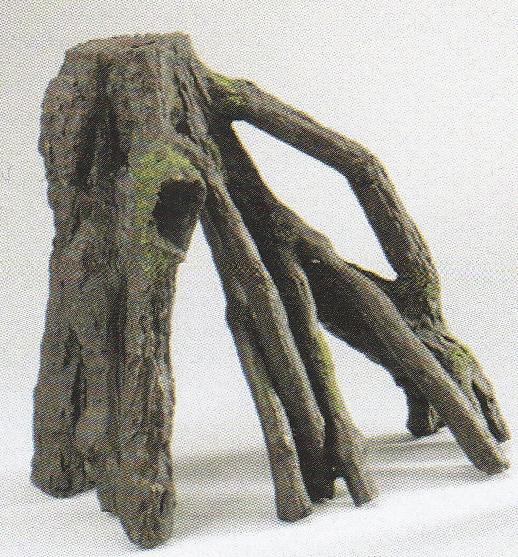 Mangrovenwurzel