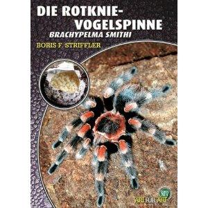 Die Rotknie-Vogelspinne