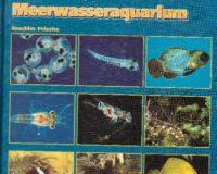Erfolgreiche Nachzucht im Meerwasseraquarium