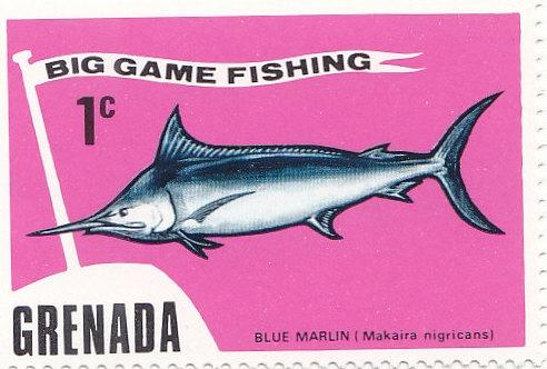 Blauer Marlin (Makaira nigricans )