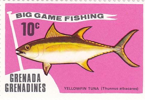 Yellowfin Tuna (Thunnus albacaes)