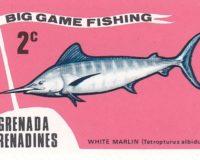Weißer Marlin (Tetropterus albidus)