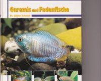 Guramis und Fadenfische