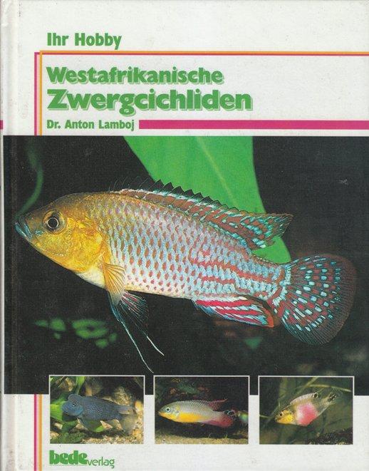 Westafrikanische Zwergcichliden