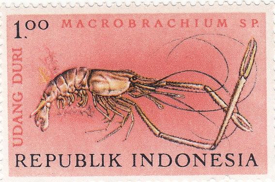 Larkrebs (Macrobrachium lar)