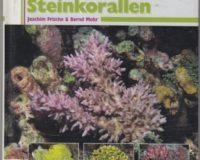 Steinkorallen