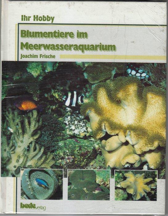 Blumentiere im Meerwasseraquarium
