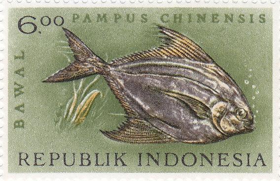 Chinesischer Erntefisch (Pampus chinensis)