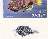 Gestreifter Drückerfisch (Balistapus undulatus)