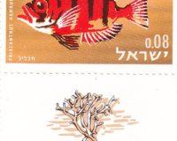 Hamrurbarsch (Priacanthus hamrur)