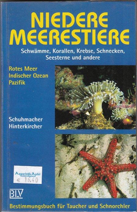 Niedere Meerestiere