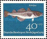 Kabeljau - Dorsch (Gadus morrhua)