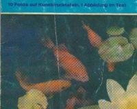 Kaltwasser-Fische Teil 2