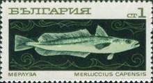 Kap-Hecht (Merluccius capensis)