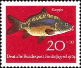 Karpfen (Cyprinus carpio)