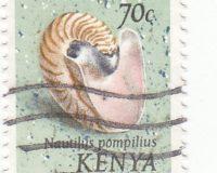Gemeines Perlboot (Pearly Bautilus)
