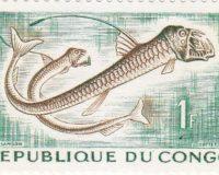 Viperfisch (Chauliodus sioani)