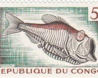 Tiefseeanglerfisch (Caulolepis longidens)