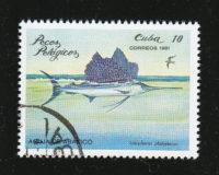 Breitflossen-Fächerfisch (Istiophorus platypterus)