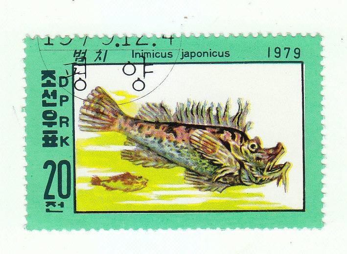 Teufelsdrachen (Inimicus japonicus)