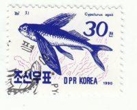 Fliegender Fisch (Cypselurus agoo)