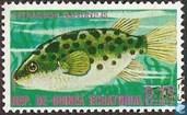 Palembang Kugelfisch (Tetraodon fluviatis)
