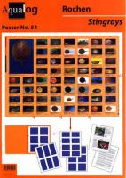 Süßwasser-Rochen / Freshwater-rays,  Aqualog Poster # 54, Faltposter Din A1.