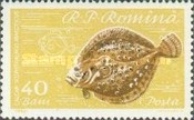 Schwarzmeer-Steinbutt (Scophtalmus maeoficus)