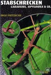 Stabschrecken, Carausius, Sipyloidea&Co.