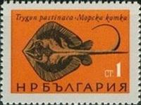 Gewöhnlicher Stechrochen (Dasyatis pastinaca)