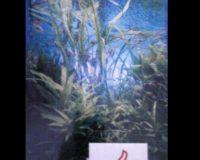 Aqua Journal Takashi Amano,  ---keine Versandkosten---