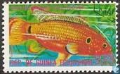 Vielfarbiger Maulbrüter (Haplochromis multicolor)