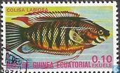 Dicklippiger Fadenfisch (Colisa labiosa)