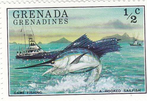 Atlantischer Fächerfisch (Istophorus platyterus)
