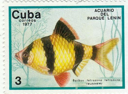 Süßwasser-Fische