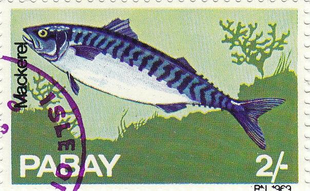 Makrele ( Scomber scombrus)