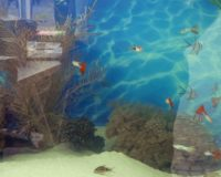 Aquaristik Süßwasser