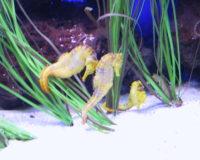 Meerwasser-Fische