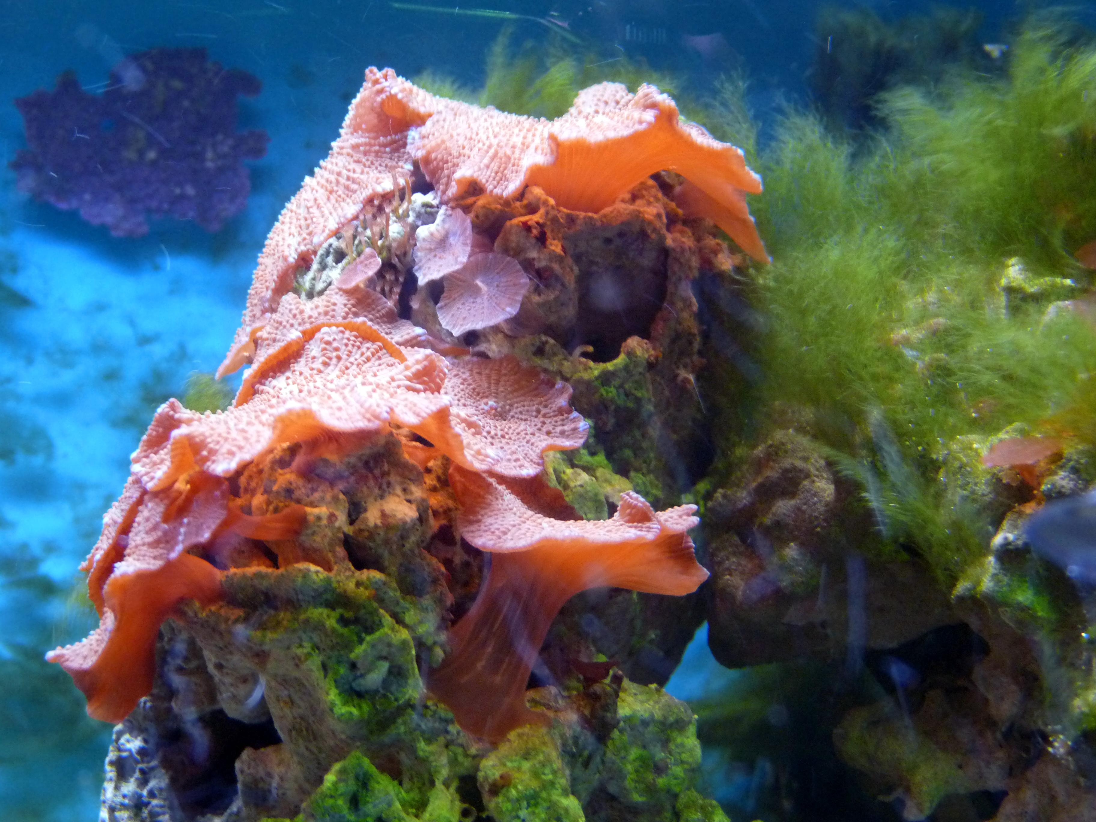 Meerwasser-Wirbellose