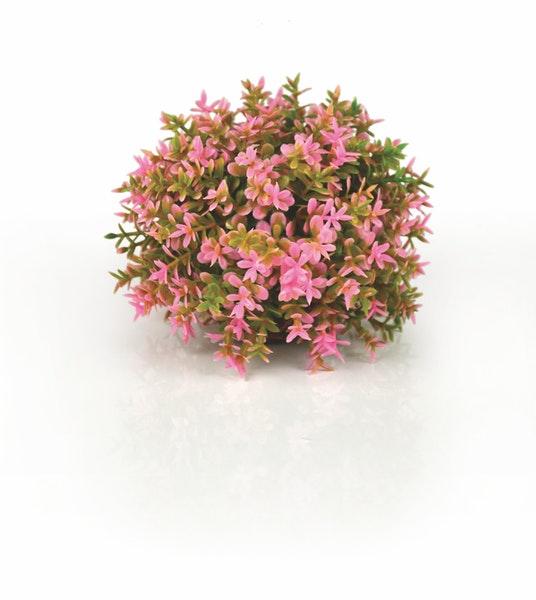 biOrb - Pflanzen